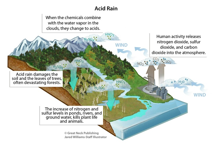Acid Rain: This illustration shows the effects of acid rain on the environment.  Human activity releases harmful chemicals into the atmosphere.  These chemicals combine with water vapor in the clouds and change to acids.  Acid rain damages all parts of the environment.