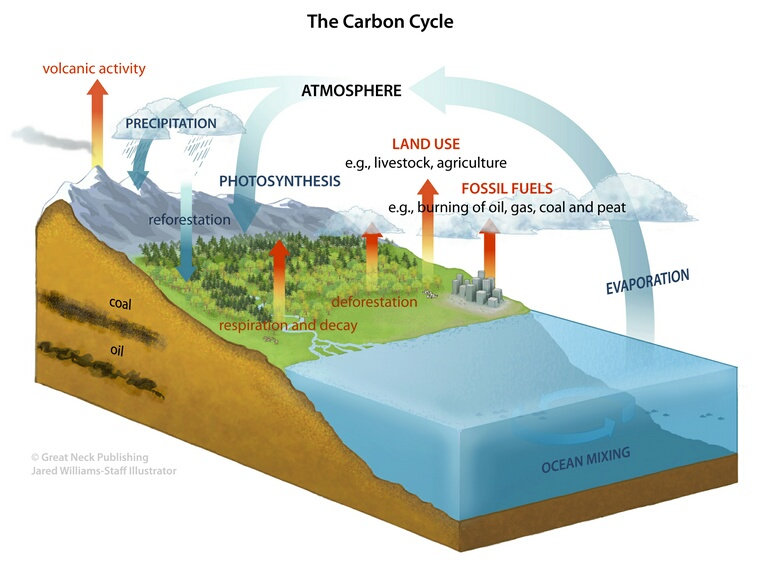 Carbon-based Molecules: Although the element carbon is mainly found in living things, it is also vital to many non-living substances and processes on Earth.