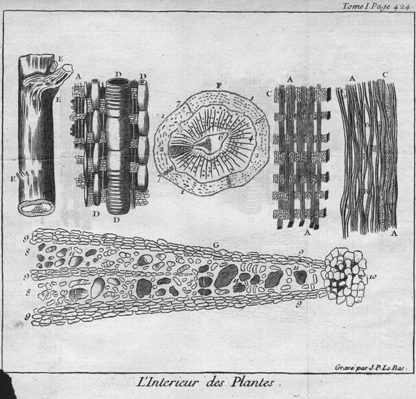 Circa 1750, A study of plant cellular structures. (Photo by Hulton Archive/Getty Images)