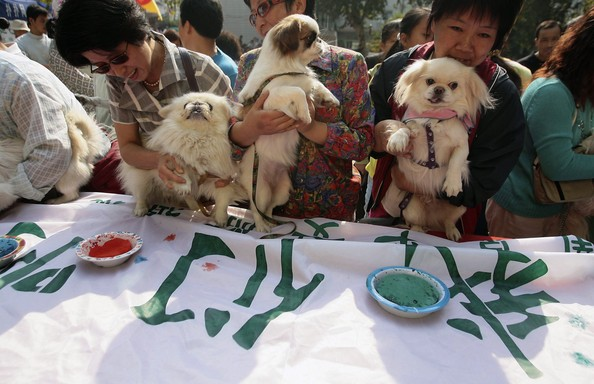 NANJING, CHINA - OCTOBER 4:  (CHINA OUT) Animal rights activists make claw prints with their dogs on a banner to protest against eating dog and cat during World Animal Day October 4, 2006 in Nanjing of Jiangsu Province, China. Animal welfare groups, sanctuaries and individuals throughout China take part in World Animal Day to heighten public awareness of animal issues and to encourage people to think about how humans relate to animals.  (Photo by China Photos/Getty Images)  -- Image Date: 10/4/2006  -- Image Date: 10/4/2006
