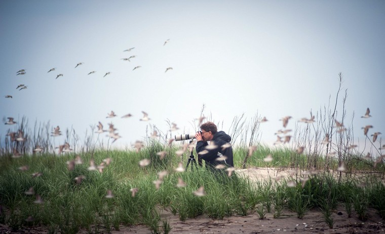 Michael Parr, of the American Bird Conservancy, gets photos of some of the bird species that are feeding, May 28 2013 in Mispillion Harbor, Delaware.The Delaware Shorebird Project monitors migratory shorebirds that stop in Delaware Bay in order to develop conservation and management programs to protect them. The Red Knot, distinguished by its red breast, is currently a candidate for listing under the Endangered Species Act, as their populations have declined recently. (Andre Chung/MCT)