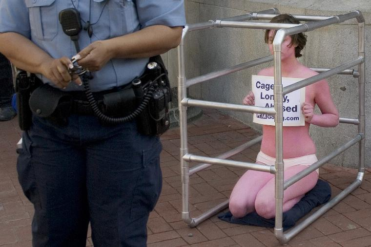 POLICE END PETA PROTEST: DC Police officer, holding hand-cuffs, stands in front PETA (People for the Ethical Treatment of Animals) member Amber Coon from Norfolk, VA, wearing only pink body paint and crouching in a cage mimicking the living of pigs on factory farms, protesting a gathering of pork-industry representative at the 2005 World Pork Congress in China Town section of Washington, DC, April 28, 2005. DC Police ended protest prematurely for lack of valid protest permit without making an arrest. (UPI Photo/Kamenko Pajic)