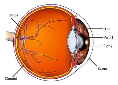 AR00032 labeled eye