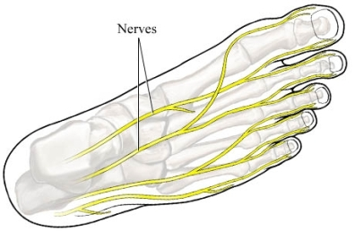 si55550740 97870 1 nerves foot
