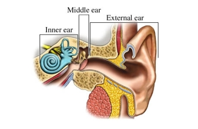 si55550968 97870 1 regions ear