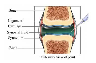 nucleus fact sheet image